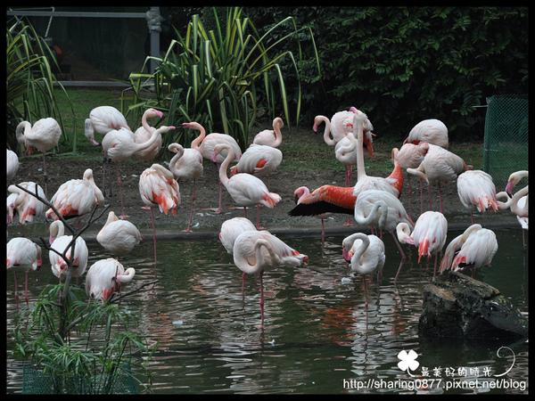 《2010新年香港遊》九龍公園 @penny小食光輕旅行