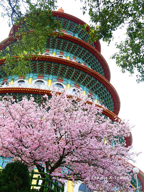 《旅遊‧台北》我聽見花開的聲音‧淡水天元宮一年一度櫻花之旅 @penny小食光輕旅行
