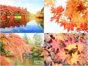 今日熱門文章:《關東秋之旅》輕井澤雲場池,秋天的調色盤美不勝收,值得您親眼見證
