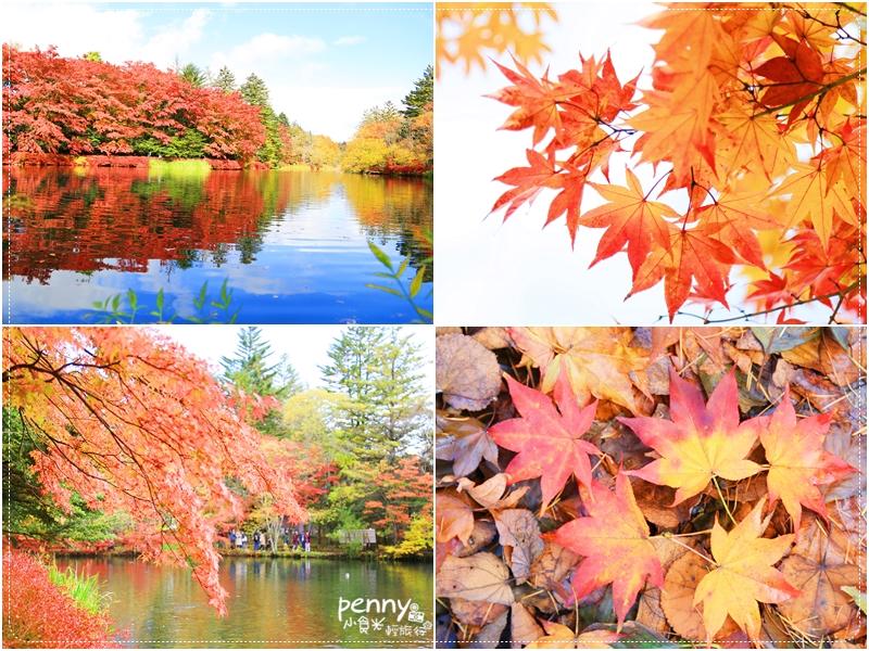 《關東秋之旅》輕井澤雲場池,秋天的調色盤美不勝收,值得您親眼見證 @penny小食光輕旅行